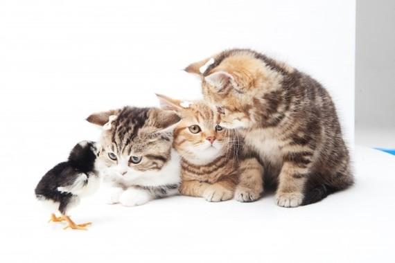 子猫の時はヒナと仲良しだが…。