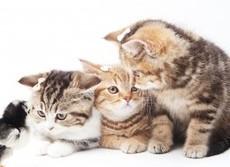豪州と米国の猫、毎年数十億羽の鳥を殺す 衝撃の報告に「キャットウオーズ」論争