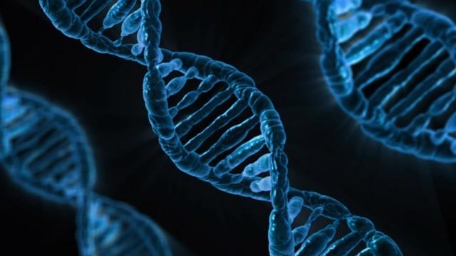 遺伝と環境の複雑な組み合わせが統合失調症に