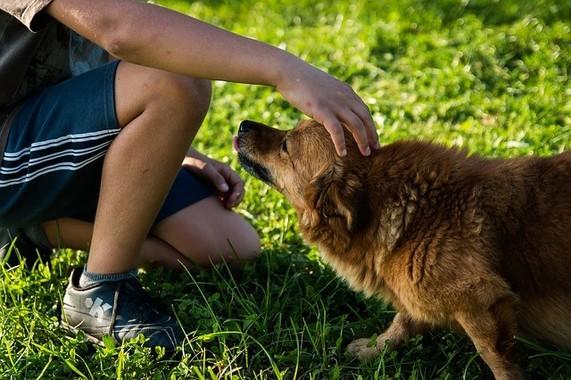 愛犬と自分を守るためにもマダニ対策の徹底を