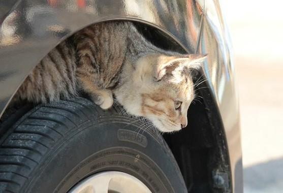 寒い日にタイヤに隠れる猫(日産自動車「#猫バンバン プロジェクト」より)