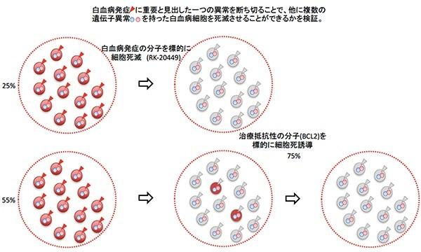 二正面作戦で急性骨髄性白血病を救う仕組み(理化学研究所の発表資料より)