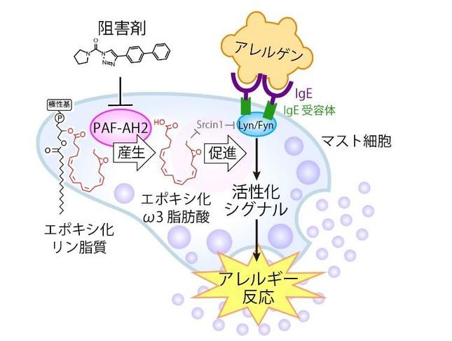 まさかのオメガ3脂肪酸の意外な働き(画像はプレスリリースより)