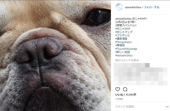 草なぎ剛さんの愛犬「くるみちゃん」(写真は「新しい地図」インスタグラムより)