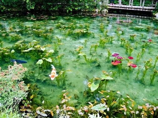 クロード・モネの「睡蓮」のような根道神社そばの池