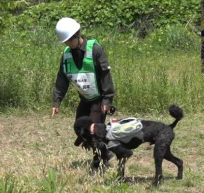 「やる気判定ベスト」を着た救助犬の実験(東北大学と麻布大学の発表資料より)