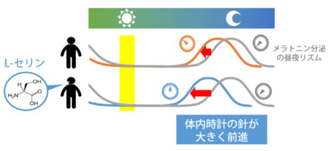 体内時計の針を進める仕組み(九州大学の発表資料より)