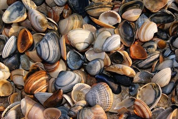 まさかの大人の食物アレルギー、多いのは貝類