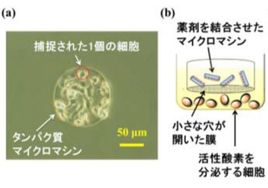 マイクロマシンが活性酸素を除去する仕組み(産業技術総合研究所の発表資料より)