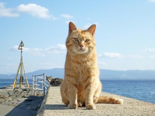 オス猫は旅に出るのが宿命だ