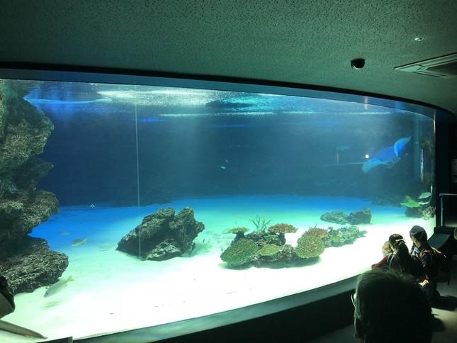 11月9日の水槽の様子。個体数が激減した。画像はたなか(@sho_tanaka)さん提供