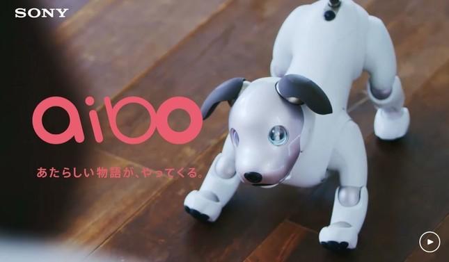 aibo(画像はソニーのホームページより)