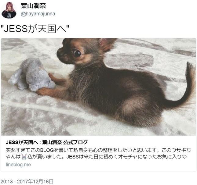 愛犬の事故死を報告したモデルに中傷(画像は葉山さんのツイッターより)