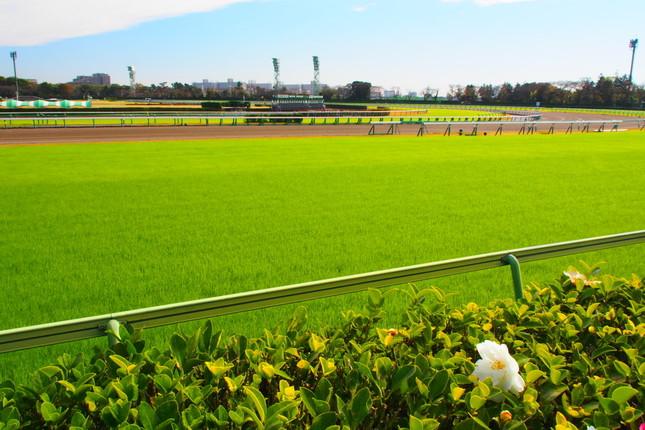 有馬記念が行われた中山競馬場