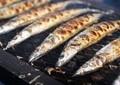 サンマだけではない「漁獲量激減」 日本周辺の海に何が?