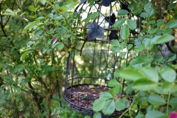 アロマが小鳥に悪影響を与える恐れ(写真はイメージ)