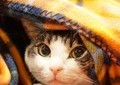 犬・猫飼えば「手っ取り早くSNSで有名に」 はあちゅう投稿に「ペット遺棄助長」批判