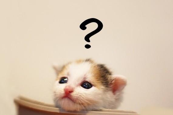 猫に靴下はダメ?(画像はイメージ)