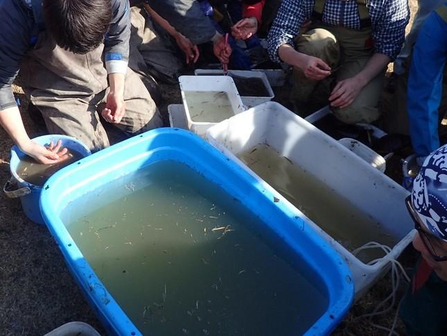 捕まえた魚の識別作業。当初、綺麗な水は用意されていなかったという(同)