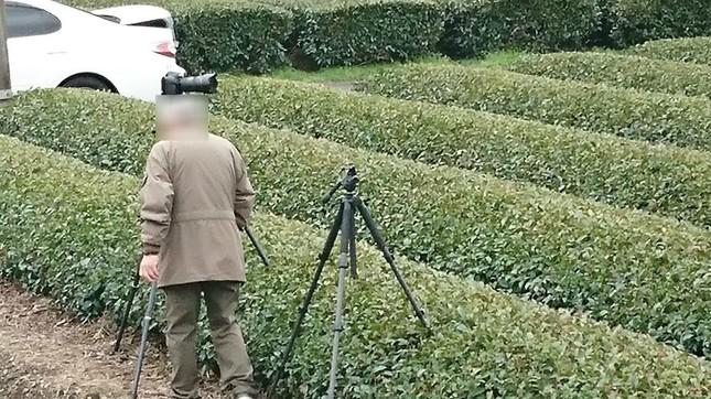 撮り鉄の男性が茶畑にカメラの三脚を立てている(提供写真、編集部で一部加工)