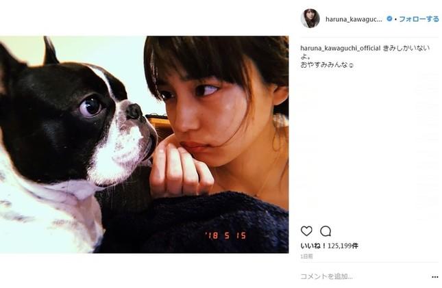 愛犬と見つめあう川口春奈さん(画像は川口春奈さんのインスタグラムより)