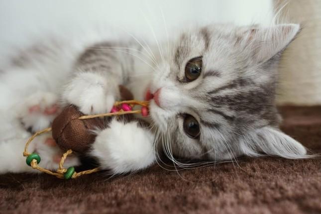 ペット店員の不適切行為に「虐待」批判(写真はイメージ)
