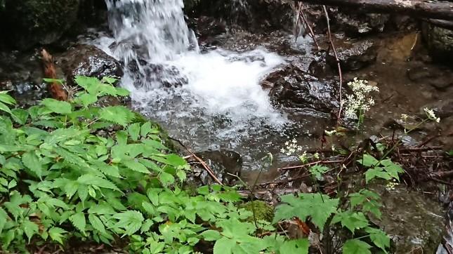 渓流なら水は飲めるはずだが…(写真はイメージ、今回の事案と直接の関係はありません)