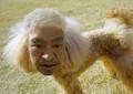松本人志&Amazonの新番組スタートか? 「まつもと犬」が渋谷交差点をジャック!