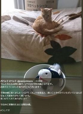 「うしくん」「カエルくん」を興味深そうに見つめる茶猫の「たる」(パペットマペットさんのツィッターより)