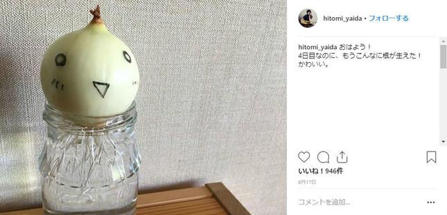8月17日投稿時点、成長当初の玉ねぎ(矢井田瞳さんのインスタグラムより/画像コメント部分は一部加工)