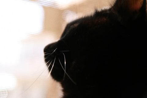 日本での黒猫の人気は?(写真はイメージ)