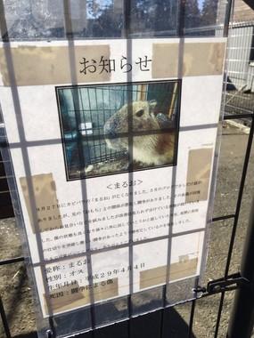 日立市かみね動物園に掲示された、カピバラ「まるお」の最期を伝える張り紙(写真提供:沼底なまず@C95土曜東F02b(@eenamazu)さん)