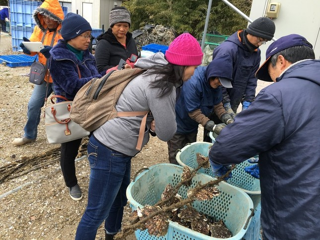 フィリピンでのカキ養殖指導の様子(写真提供:いしのまきNPOセンター)