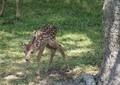 「子鹿には絶対に触らないで!」 奈良公園でのマナー呼びかけに「初めて知りました」の声