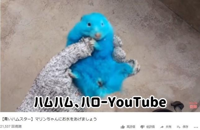 新規チャンネルで公開された動画より