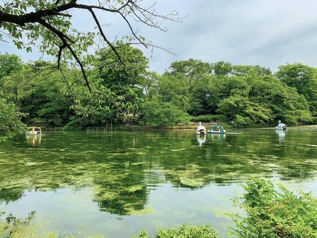 見事に復活した井の頭池(写真は、kento nakayama@kento_archさん提供)