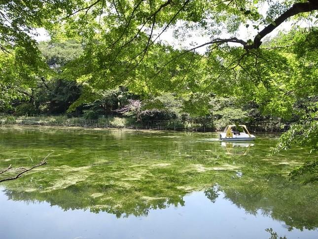 やはり井の頭池を捉えた写真(ハルモ(@harumo95)さん提供)