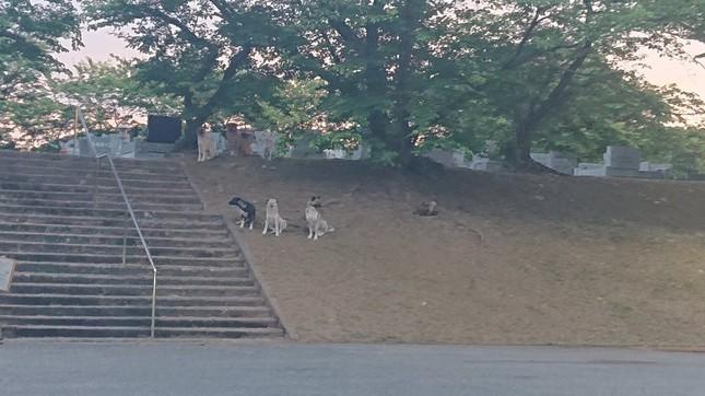 野犬を見かけた「よーいち@」(@Yo_1_CAAD)さんより提供(2)