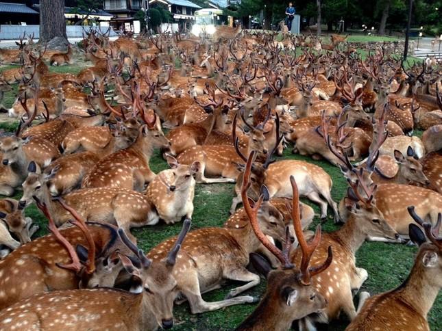 「鹿だまり」の様子(画像は同博物館の別の職員が16日19時頃撮影、提供)(1)