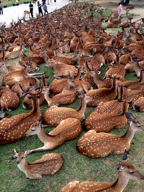 「鹿だまり」の様子(画像は同博物館の別の職員が16日19時頃撮影、提供)(2)