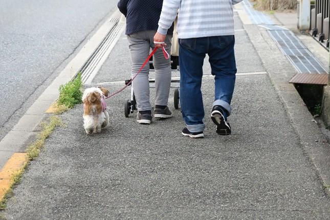 アスファルトの上を歩く犬(画像はイメージ)