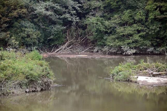 笹川湖は台風の後、湖面が濁り折れた木の枝などが堆積。土砂が崩れたような形跡も見られる
