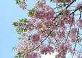 田崎史郎氏「私ですら...」桜を見る会問題には辛口論評 読売・産経も...
