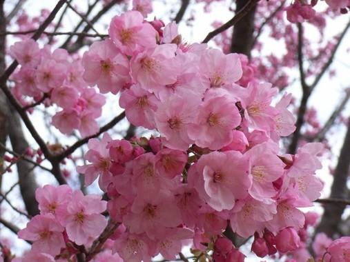 野党が「桜を見る会」を追及している