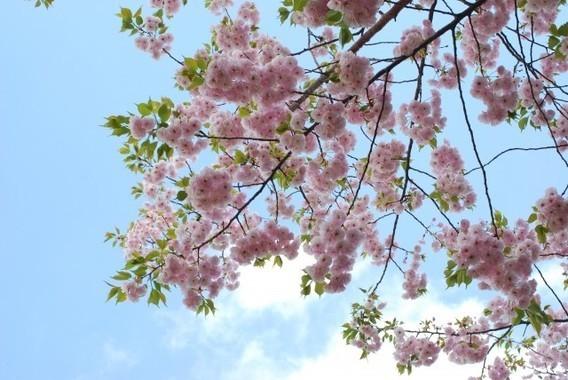 「桜を見る会」をめぐる報道が続いている