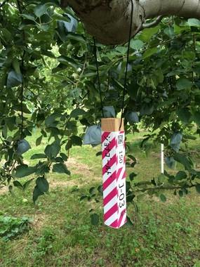 リンゴなど果樹の生産工程を樹木1本ごとに管理(ライブリッツのAgrion果樹)