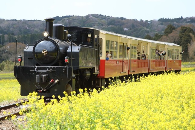 写真は小湊鉄道沿線の光景