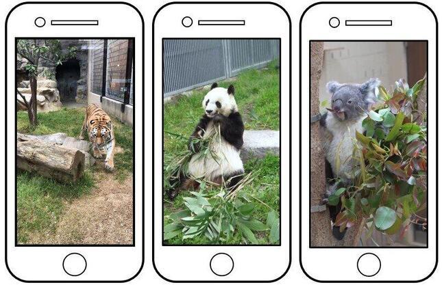 神戸市は公式TikTokアカウントで王子動物園の動物の短編動画を公開していた(市のウェブサイトから)