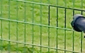 「黒塗り」されたフェンス越しにカメラを構える人物(読者提供、編集部修整)