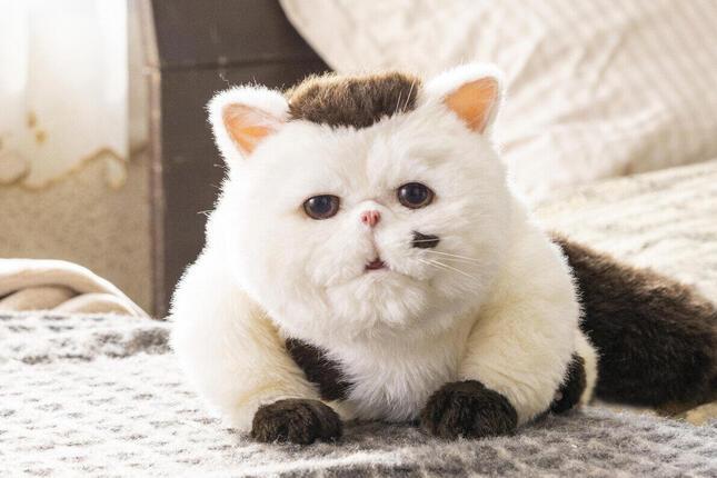 公開された「ふくまる」(C)「おじさまと猫」製作委員会